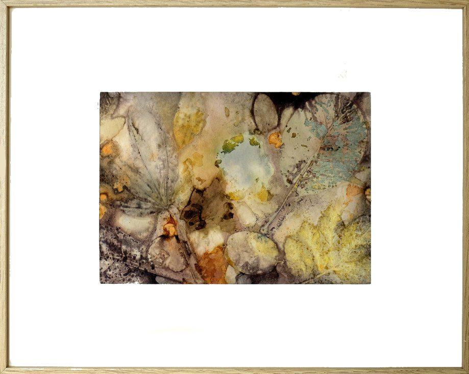 tableau - écoprint - impressions botaniques - papier
