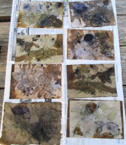 Impressions botaniques, papier, Coloratura, ecoprint